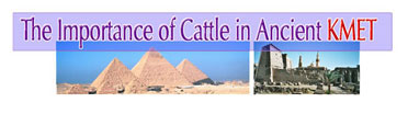 the Important ofcattle in Kemet